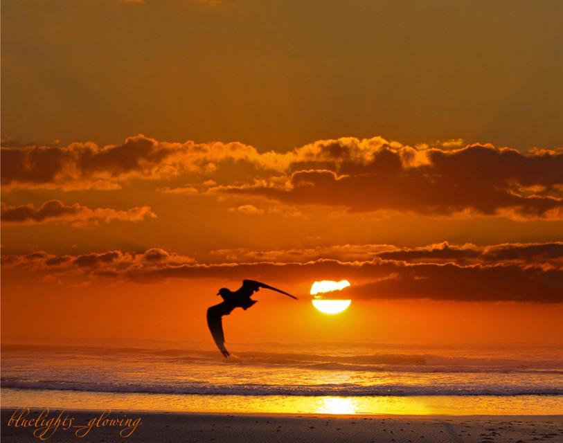 Sunny day everyone ✨☀️✨ • my edit • • #spring  #naturephotography  #goodmorningworld  #myeditedphoto  #beachday  #freetoedit