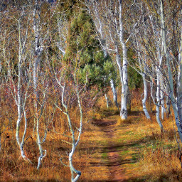 angeleyesimages landscape landscapephotography nature naturephotography freetoedit