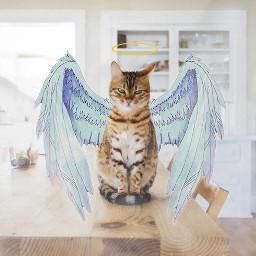 pet petlove petday love cat freetoedit