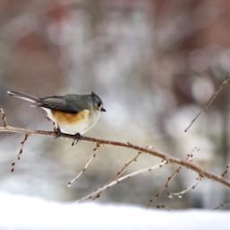 viewfrommywindow bird nature wildlife beauty freetoedit