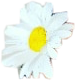 flower whiteflower white pretty beautiful freetoedit