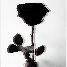 freetoedit rose black aesthetic editit