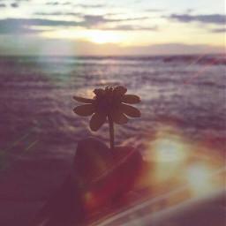 memories love life peace flower