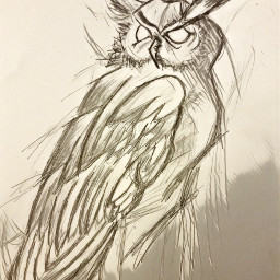 freetoedit drawing owl draw magiceffects