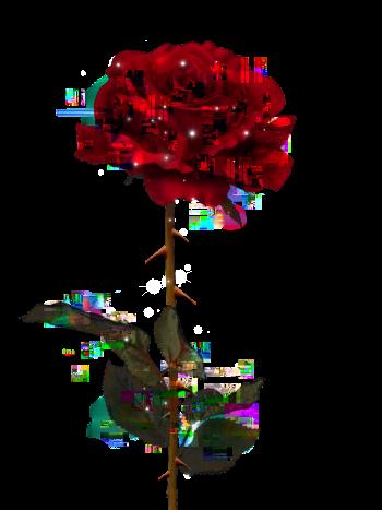 Life Nature Rose Fleur France Rouge Pixel