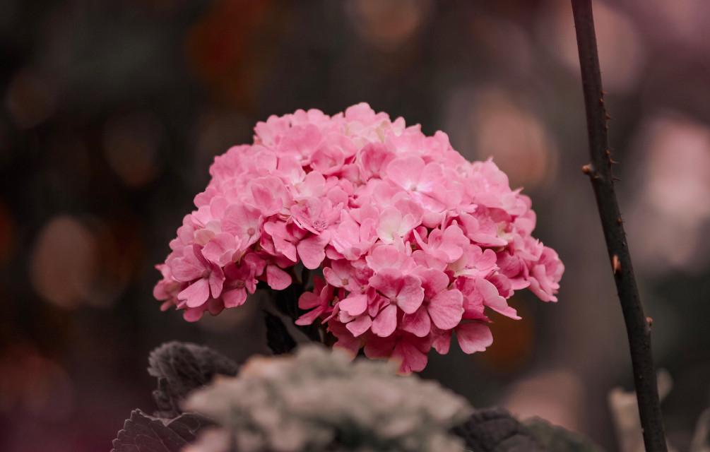 #freetoedit #flowershot #flowersfollower #flowerstagram #flowerstyles_gf #flowerslover #photographyart #photographylovers #photographyeveryday #naturephotograpy #naturelove #photographyarts #fotografiando #flowerart