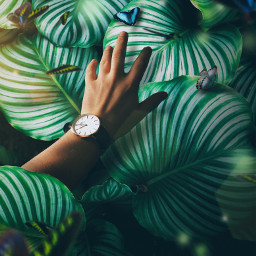 danielwellington dwinrussia watch watches butterfly freetoedit