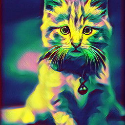 cat cats colorbright colorbrighteffect colorbrightmagiceffect