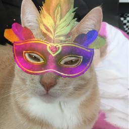 srccarnavalmask carnavalmask freetoedit interesting mycat