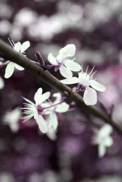#blossom,#catcuratedblossom