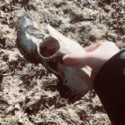 freetoedit deer deerskull skull creepy