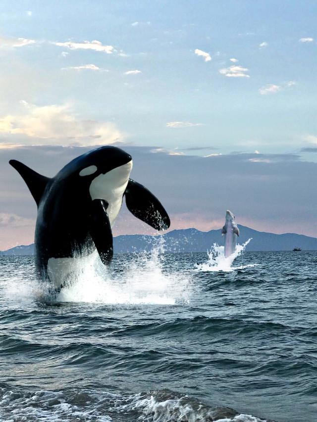 #freetoedit animals of sea