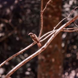 freetoedit naturephotography naturephotographysession natureaddict naturesbeauty