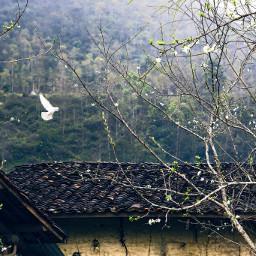 peace pigeon hagiang vietnam landscape