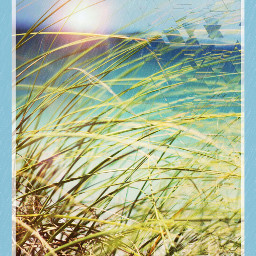 plains grasslands nature summer