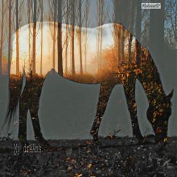 horse trees doubleexposure surrealism madewithpicsart freetoedit