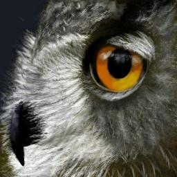 dcwildanimals wildanimals owl bird wildanimal