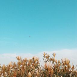 myphotography sky freetoedit pcdaylight pcspringishere pconthegrass