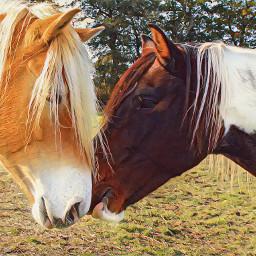 freetoedit minimaledit horses