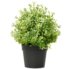 plant flowerpot freetoedit