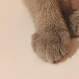 pews cat animal animalphotography pcpawportrait