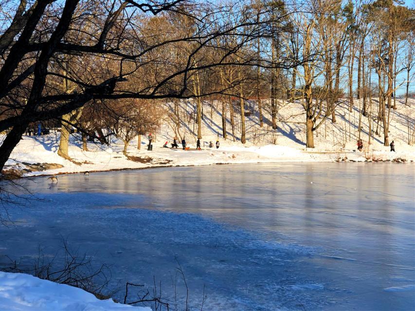 #freetoedit Good morning! #winter #sunny #pond #frozen #shadows #nature