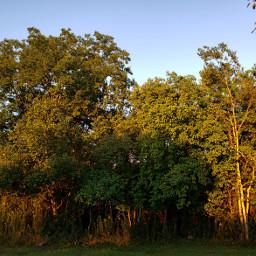 landscape forrest sunlight naturephotography freetoedit pcdaylight daylight