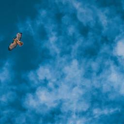 freetoedit lookup hawk sky clouds pcinthesky pcbird