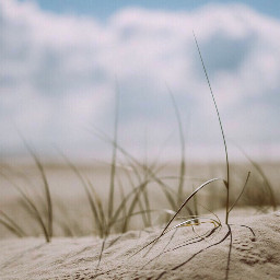 freetoedit nature beachdunes wildplants grass