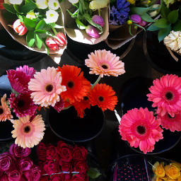freetoedit florals spring floralcanvas colorful