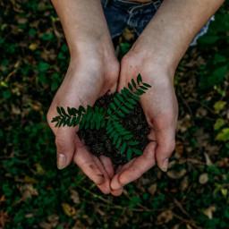 earth grass nature hand hands freetoedit