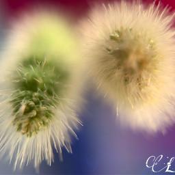 freetoedit grassflower