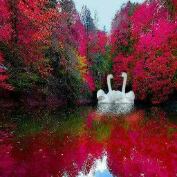 swan red passion love_yourself freetoedit