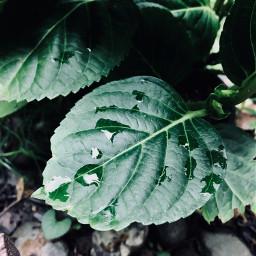 pccolorgreen colorgreen photography dew leaf freetoedit