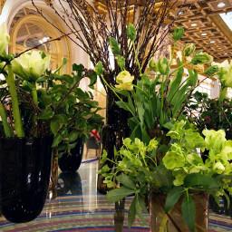freetoedit florals interiordesign illuminated decor pccolorgreen