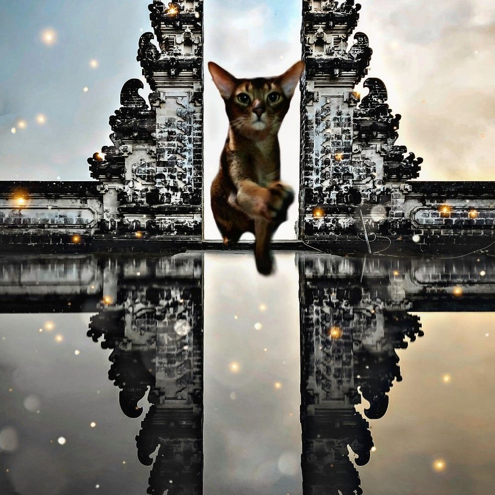 #freetoedit #catlove #beatiful #firstedit