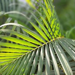 leaves pccolorgreen colorgreen pcleaves pcgreenminimalism pcleavesisee leavesisee