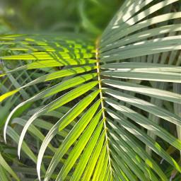 pccolorgreen colorgreen pcleaves leaves pcgreenminimalism pcleavesisee leavesisee