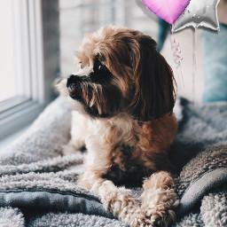 freetoedit cute dog baloons pinkheart