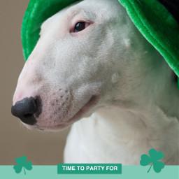 stpatricksday freetoedit templates dog leaf