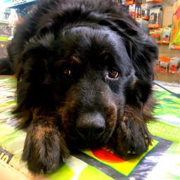 freetoedit dog dogsofpicsart