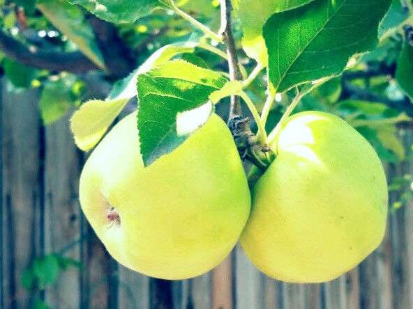 #myphotography #apples #green #sour #delicious