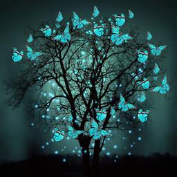 butterflybrush darknight