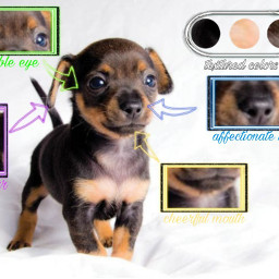 freetoedit anatomia dogcute cute dog ecanatomy