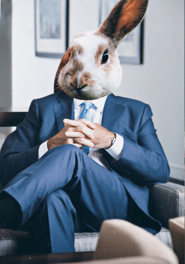 """#freetoedit  """"Sir do we really need an import of 1000 carrots for this Month?""""  """"You're fired""""  #boss #chefe #chef #business #businessman #rabbit #conejo #hase #surreal #animalface #face #animal"""
