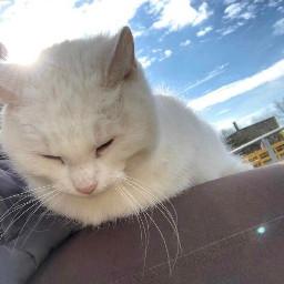 sweetie cat love white frozenyogurt