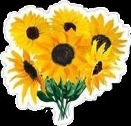 Sunflower aesthetic.