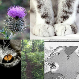 warriorcats thistle thistleclaw warrior cats freetoedit
