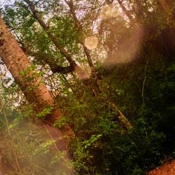 edit dynamolli forest woods backyard