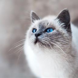 cute cat cats pet animal freetoedit